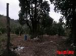 農地-G284大溪樂活農地-桃園市大溪區