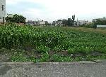 農地-11號仔美田-彰化縣埤頭鄉