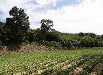 農地-f-108插角美農地-新北市三峽區插角段內插角小段