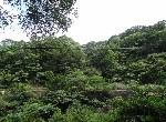 農地-f-107鳶山林地-新北市三峽區中埔段