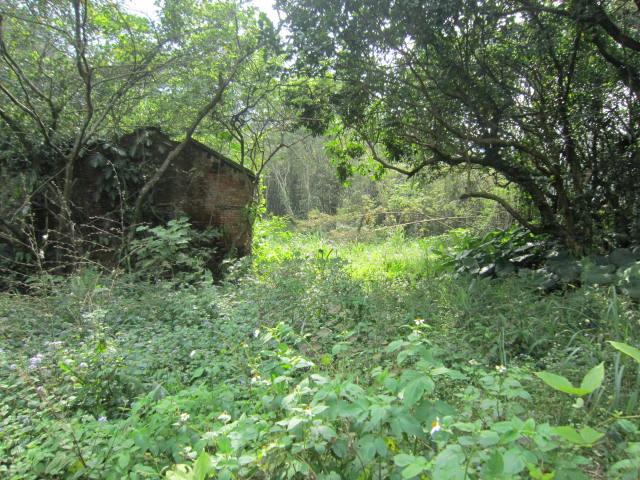 農地-034橫溪土地八千坪-新北市三峽區