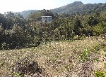 農地-f-34大板根平坦農地-新北市三峽區插角段