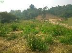 農地-大社規劃農地(五)-高雄市大社區