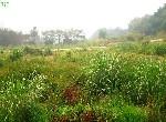 農地-大社規劃農地(三)-高雄市大社區