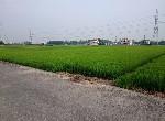 農地-柳營建業路朝南美農地-臺南市柳營區柳營段柳營小段