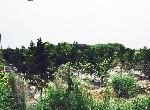 農地-溪州美農地II-彰化縣溪州鄉