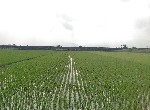 農地-河岸美農地-宜蘭縣壯圍鄉復興段