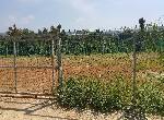 農地-聖亭路美農地B-桃園市龍潭區八張犁段