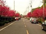 農地-區公所旁農地5-臺中市新社區興社街2段