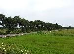 農地-新屋大牛欄三面路農地-桃園市新屋區大牛欄段大牛欄小段路
