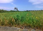 農地-中洲國小休閒農地-臺南市學甲區中洲段