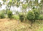 農地-中埔台三線農地-嘉義縣中埔鄉竹頭崎