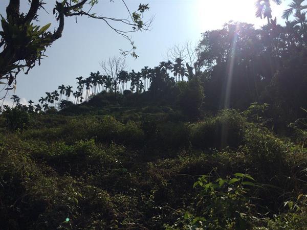 農地-地理環境佳景色美好規劃農-嘉義縣竹崎鄉下坪路