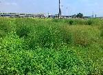 農地-路竹無汙染有機農地-高雄市路竹區