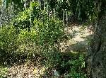 農地-龍眼林景觀旱地-南投縣中寮鄉