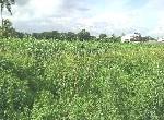 農地-石安休閒農地-高雄市阿蓮區