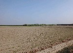 農地-下林段農地1-臺南市鹽水區下林段