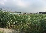 農地-柳營美農地I-臺南市柳營區八老爺段八老爺小段