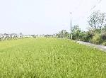 農地-田尾和平巷角田-彰化縣田尾鄉