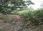 農地-東山區許秀才段880坪便宜農地1-臺南市東山區許秀才段