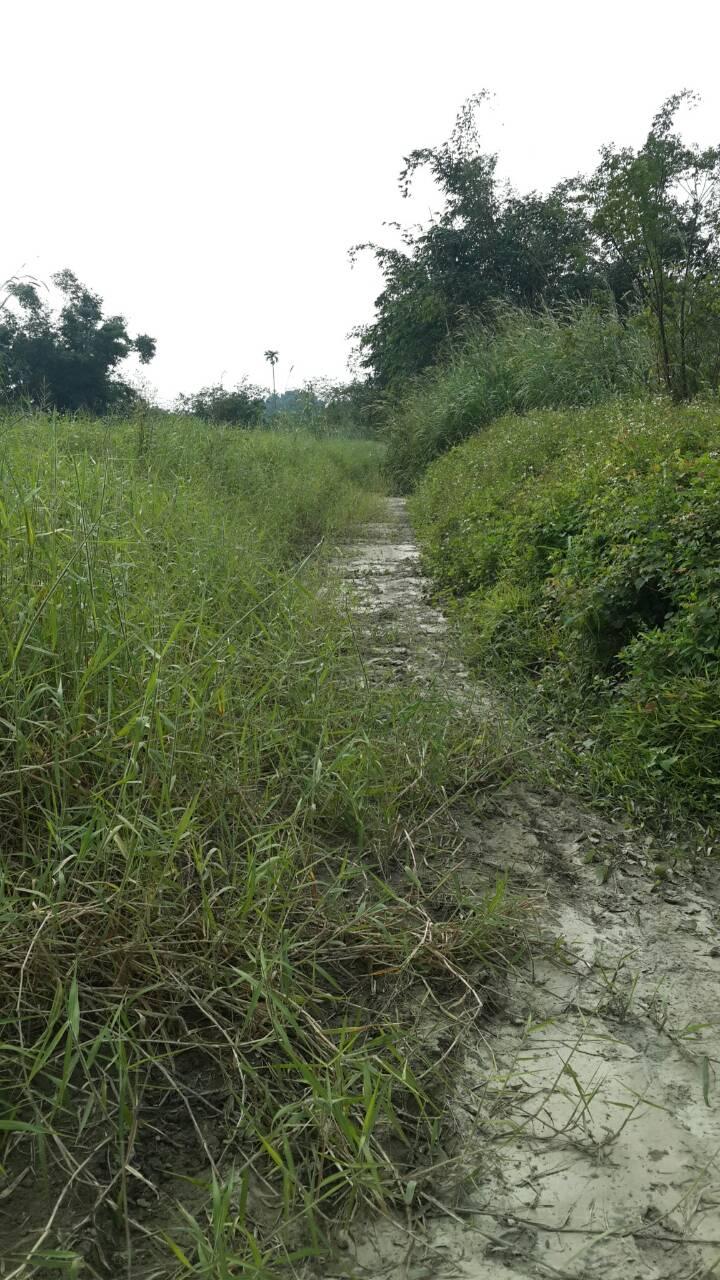 農地-東山區許秀才段809坪便宜農地2-臺南市東山區許秀才段