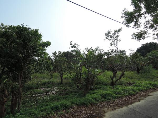 農地-左鎮漂亮農地-臺南市左鎮區菜寮段路