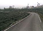 農地-鹿谷漂亮景觀農地-南投縣鹿谷鄉隆鳳段