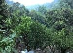 農地-東山區15甲農地-臺南市東山區