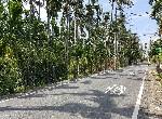 農地-麟洛大路邊農地-屏東縣麟洛鄉