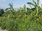 買屋賣屋租屋中信房屋-櫻花山莊稀有雙面路農地