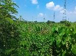農地-柳營八翁段美農地-臺南市柳營區八翁段