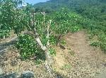 農地-南化便宜農地-臺南市南化區