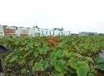 農地-新吉工業區2.26分增值農地-臺南市安定區新吉村