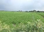 農地-後壁崁頂農地【約7.08分】-臺南市後壁區四安段