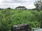 農地-安定牛肉寮農地-臺南市安定區六塊寮段