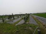 農地-下營區漂亮文旦園-臺南市下營區