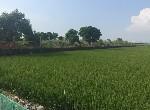農地-台南特殊農用(廟地)-臺南市柳營區