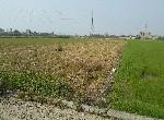 農地-鹽水657休閒農地-臺南市鹽水區