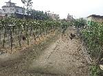 農地-龍肚休閒農園-高雄市美濃區