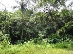 農地-燕巢觀光優閒果園-高雄市燕巢區