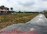 農地-中埔金蘭農地-嘉義縣中埔鄉金蘭村