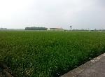 農地-F013-北港路區段農地-嘉義市西區