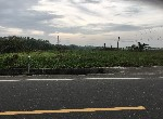 農地-優質開心農地-高雄市阿蓮區青安段