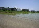農地-本淵寮農地-臺南市安南區本原街3段