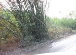 其他用地-江南風景林地-臺南市柳營區果毅後路
