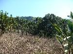 農地-f-51插角農地-新北市三峽區插角內插角小段