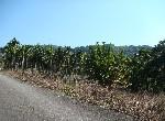 農地-f-52插角農地-新北市三峽區插角段內插角小段