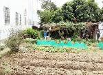 農地-太平都市計畫農地-臺中市太平區