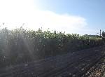 農地-西港東埔農地-臺南市西港區東埔段