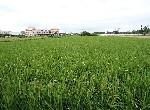 買屋賣屋租屋中信房屋-神岡中和農地